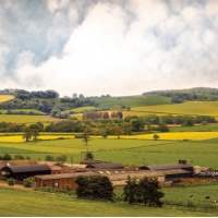International Farmland